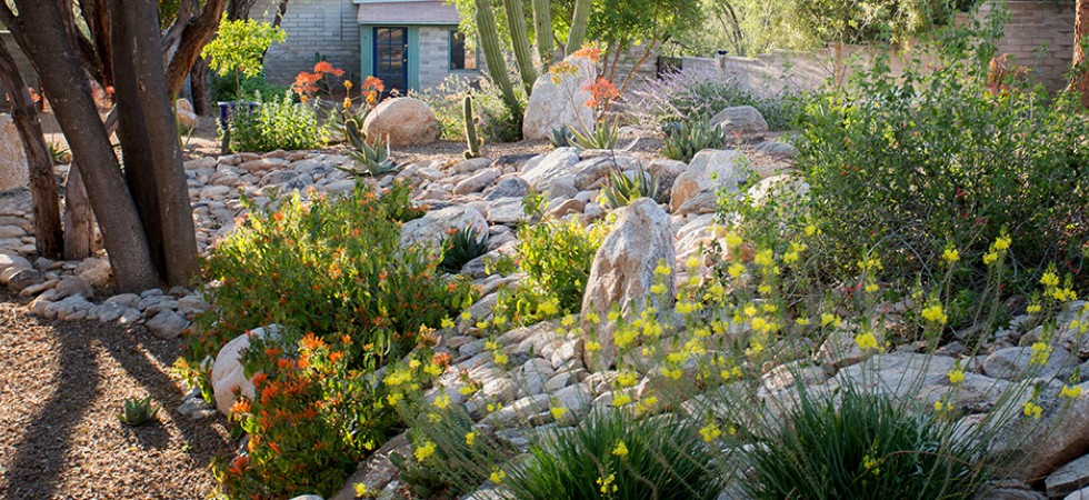 Rock Retaining Wall with Desert Blooms